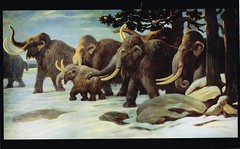 Mammoth and reindeer (NRJP) Tags: france reindeer postcard mammoth prehistoric mammals riversomme charlesknight