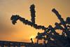 Januar (pixel-rausch) Tags: winter sunset snow dusk calendarshot