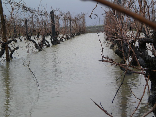 Flooded vines