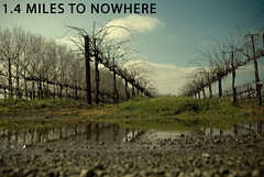 4.365 1.4 miles to nowhere (robin weese photography) Tags: vines country nowhere 365 day4 project365 4365