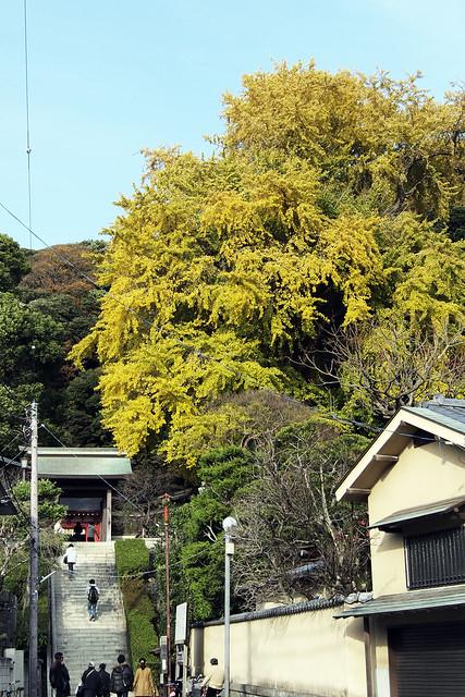 101128_141628_鎌倉_荏柄天神社