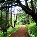 Shouf Reserve