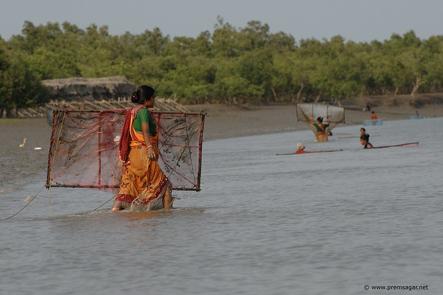 Drag net fishing - 1