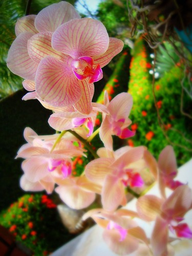 Feliz Quinta Flor by Sil Artesanato
