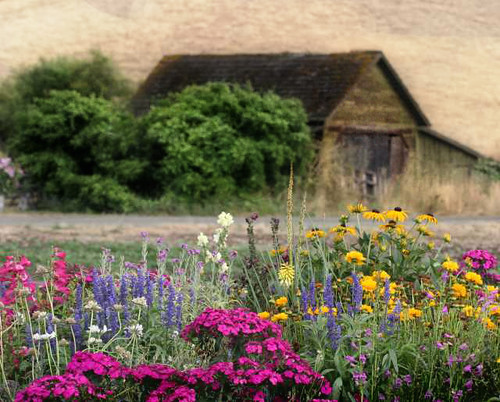 Summer Garden by Faye Pekas