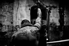 Extreme power (Funky64 (www.lucarossato.com)) Tags: nick boxe tattoo tatoo tatuaggi occhi eyes muscoli muscle leone warior guerriero uomo man nback schiena guantoni ring sport fatica sudore vittoria tigre abbandono abandoned funky64 lucarossato bn bw biancoenero blackandwhite blackwhitephotos