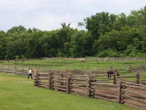 Kelley Farm garden