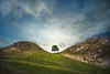 Sycamore Gap (gms) Tags: england tree history movie gap northumberland sycamore dip robinhood hadrianswall kevincostner sycamoregap