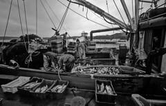 Chile - Chilo (luca marella) Tags: chile life travel sea bw white fish black america port boat fisherman documentary pb bn castro e bianco nero sud chilo marellaluca