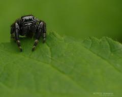 Araigne (MP7Aquit) Tags: favorite macro nature animal wildlife best animaux invertebrate gironde invertebrado invertbr