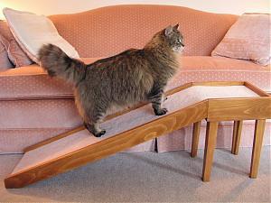 ramp-cat