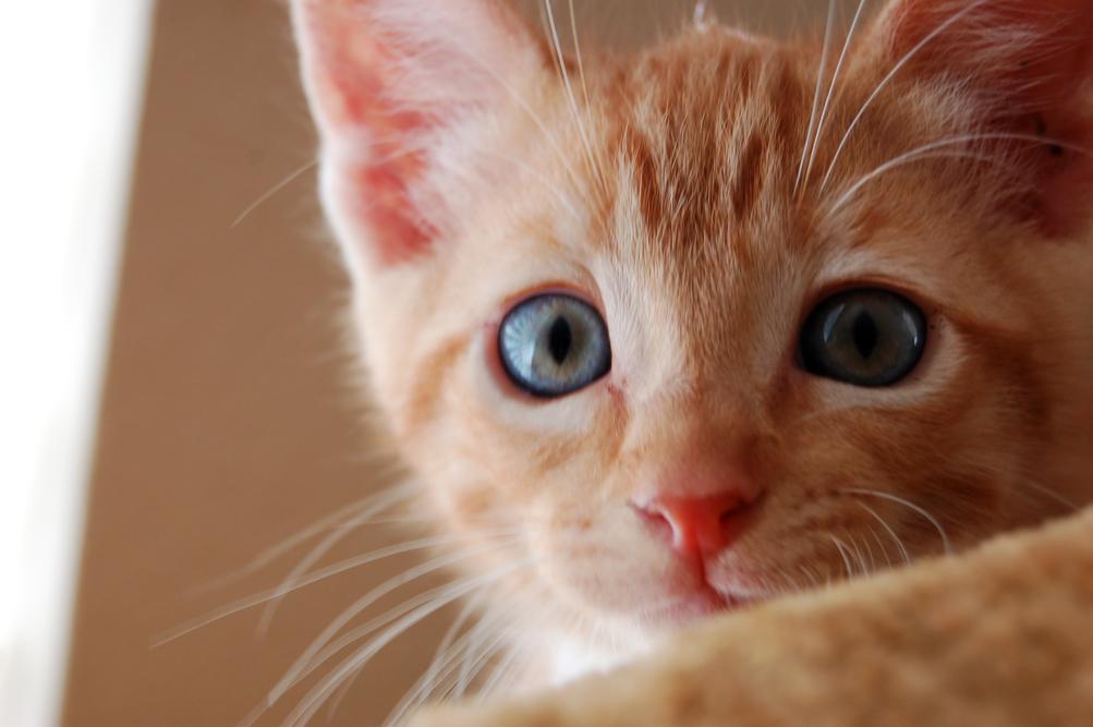 KittyBrother