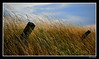 Warm Winds (Bonell Photography (dasbull)) Tags: wood blue sky color colour texture tourism nature beautiful grass fence washington nikon warm angle post perspective sequim frame pacificnorthwest wa breeze pnw 2009 borders d90 dasbull frhwofavs ronbonell