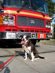 Joel Lees happy dog recently posed in front of the Beacon Hill Fire Station. Photo by Joel in the Beacon Hill Blog photo pool on Flickr.