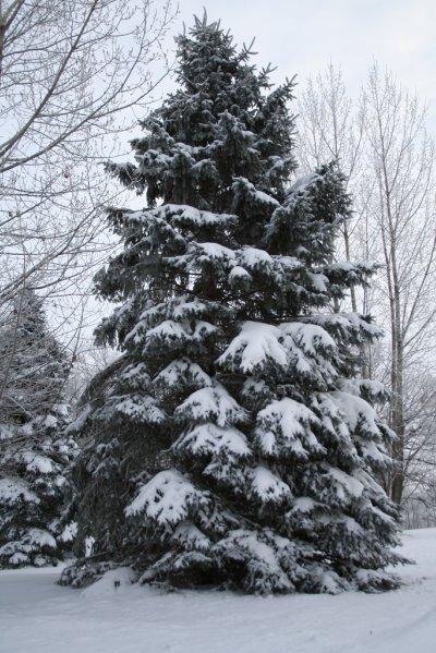 Winter Scene3