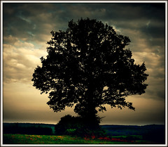 593 Tree - Silhouette (Nebojsa Mladjenovic) Tags: light summer sky sunlight mist france color tree art nature silhouette clouds digital rural dark french outdoors lumix frankreich europe burgundy panasonic ciel frankrijk nuages paysage bourgogne campagne francia arbre priroda soe morvan ete francais fz50 drvo yonne svetlost oblaci topseven abigfave superaplus aplusphoto flickrdiamond theunforgettablepictures mladjenovic topcso mygearandmepremium mygearandmebronze mygearandmesilver