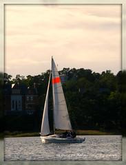 J-80 Match Race Boat No. 3 (Papa Razzi1) Tags: sea sailboat boat sailing sweden stockholm matchrace saltsjbaden baggensfjrden j80