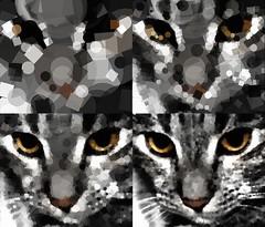 CatShapeSeries