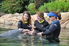 Dolphin Experience at Discovery Cove