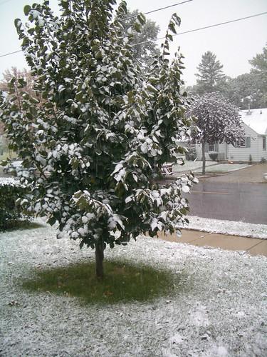 front yard snow