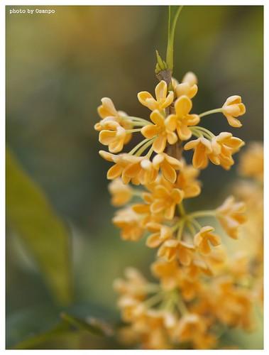 Flowers 091016 #02