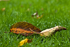 Lay beside me (iM@n) Tags: autumn nature netherlands leaves leaf nikon thenetherlands eindhoven dew brabant    d90   mywinners     nikond90