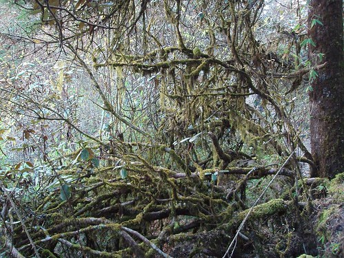 Mossy wood