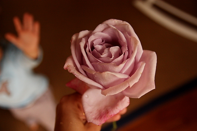 rosewithrover