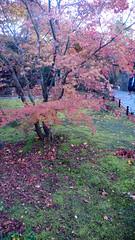 (woguwog) Tags: autumn leaves japan matsushima