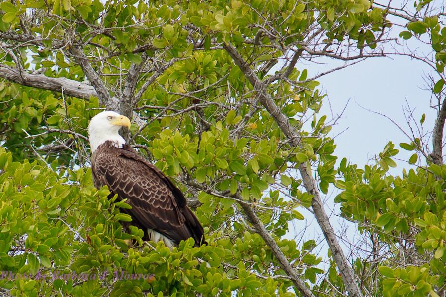 Everglades National Park-10,000 Islands (12 of 16)
