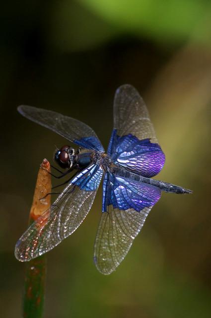 盛夏、蜻蜓、夢湖