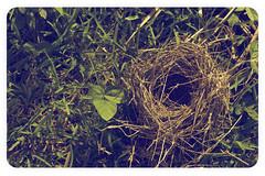 Mirame, quede en el suelo y... (Captain Whirlpool) Tags: get bird up vintage sad nest ground retro cant natalia pajaro nido suelo parar mirame lafourcade levantar levantarme