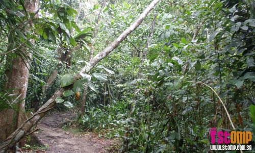 Free fruits in Bukit Timah Nature Reserve