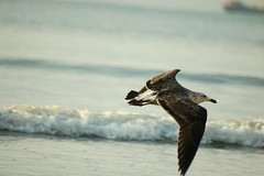 . : indo (steph_ie) Tags: bird flying liberdade passaro voando stephaniebastos