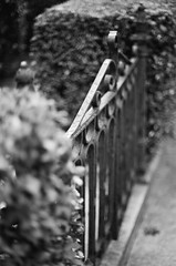 . (Ansel Olson) Tags: urban film yard fence virginia nikon gate dof kodak bokeh richmond historic neighborhood sidewalk va hedge f3 residential 50mmf14 bw400cn thefan