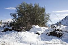 IMG_8070 (Miguel Angel Mora (GSi_PoweR)) Tags: espaa snow andaluca carretera nieve nevada sunday bosque granada costadelsol domingo maroma mlaga mountainroad meteorologa axarqua puertomontaa zafarraya sierraalmijara caosalcaiceria