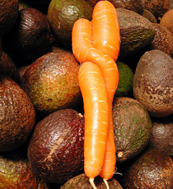Sexy carrots