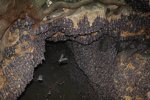 Monfort Bat Cave: Crowded Wall