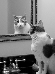 Kirby Needs Your Vote!! (Adam Grim) Tags: reflection cat mirror contest help vote