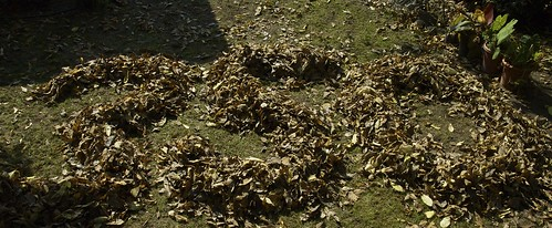 350 in fallen leaves