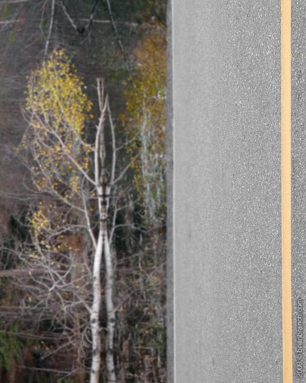 P1060042_roadside_tree