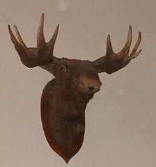 cuban_moose