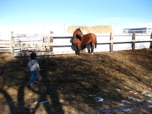 Here Horsey Horsey