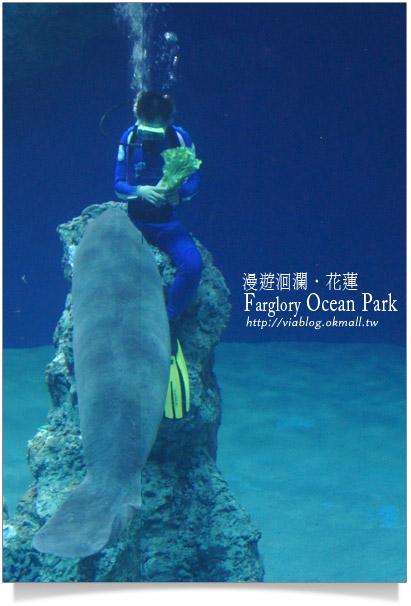 花蓮海洋公園一日遊24