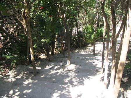 Tulum ruins steps - leave the trees!