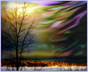 ~~ my own aurora borealis ~~ (xandram) Tags: winter tree photoshop mywinners platinumphoto theunforgettablepictures saariysqualitypictures specialshotswelltaken fakeaurora wonderworldgallery