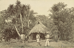 Scene from the State of Veracruz (Cornell University Library) Tags: plants huts palmtrees ponchos strawhats thatchedroofs veracruzmexico cornelluniversitylibrary culidentifier:lunafield=accessionnumber culidentifier:value=155309000694