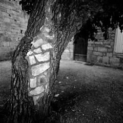 Tree with bricks (2008_030_005) (mgphoto.net) Tags: bw france 120 6x6 film rollei analog rolleiflex mediumformat scan scanned epson medium format analogue provence acros abbaye v700 mittelformat 6008 ab