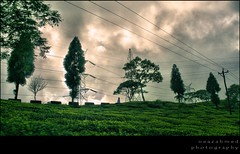 walking lonely (noprayer4dying) Tags: road sky cloud india tree green girl walking landscape wire path cable pole canon350d electricity darjeeling current hdr connection piller neazahmedphotography teadgarden