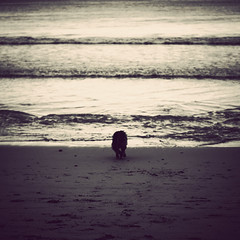 Escape (Kerrie McSnap) Tags: ocean sea cliff dog beach square sand nikon waves torquay d60 woofo thelittledoglaughed